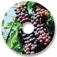 Compostable Wine Glass Tags