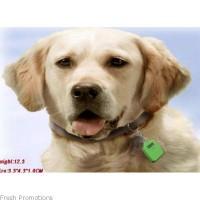 Dog Pedometer